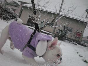 雪楽しい★