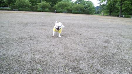 いつも僕一人なのこの公園