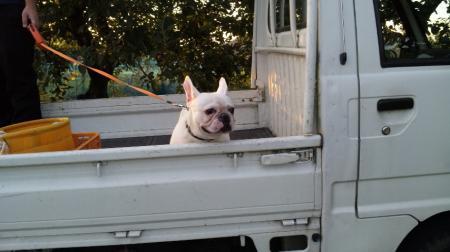 僕、今日はトラックで散歩だよ