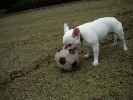 大きいボールだな・・