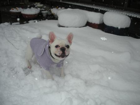 雪だぁ~☆