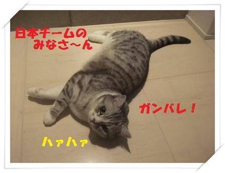 10_20110125220754.jpg