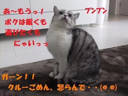 12117_20101211215154.jpg