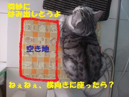 12187_20101218110306.jpg