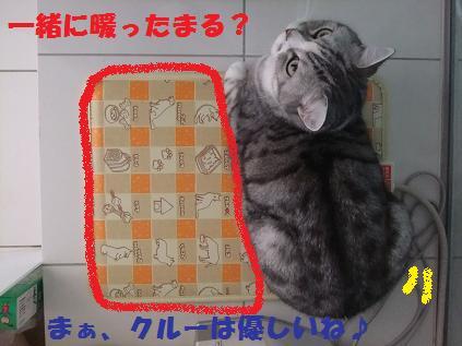 12188_20101218110024.jpg