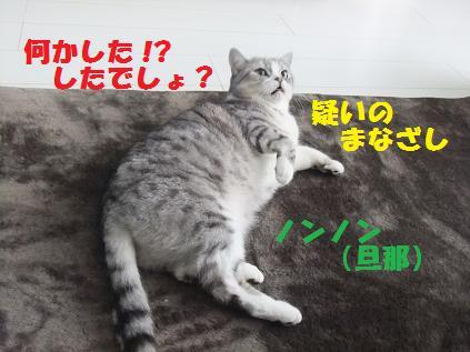 12193_20101219125100.jpg