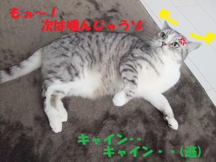 12197_20101219091818.jpg