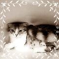 12227_20110120193241.jpg