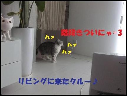 1_20110110151818.jpg