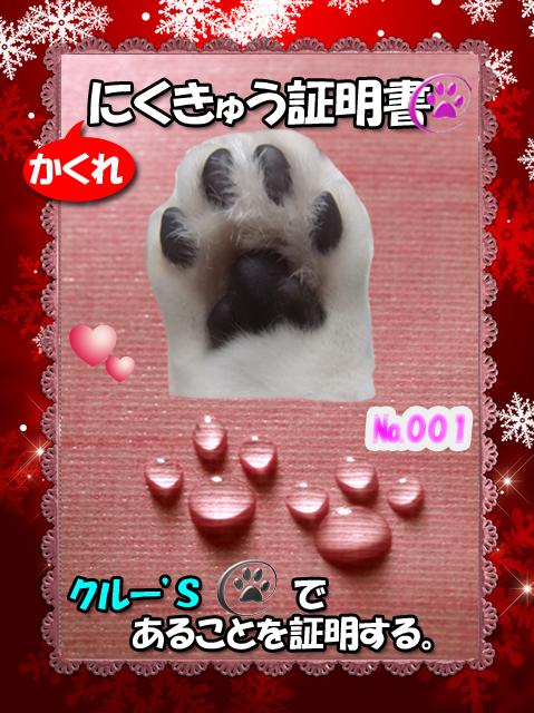 かくれ肉球(クルー)110222