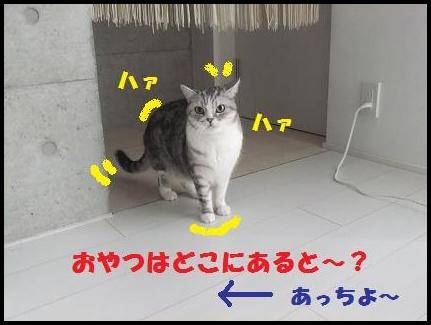 2_20110110151818.jpg