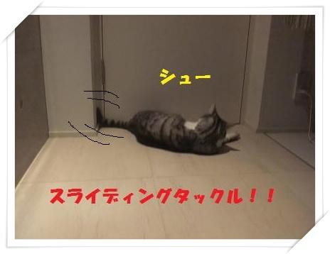 2_20110125220732.jpg
