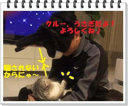 3_20110108101004.jpg