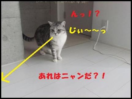 3_20110110151817.jpg