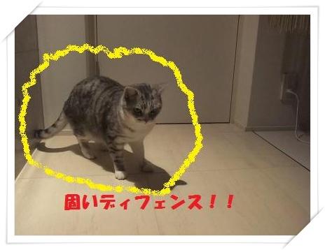 3_20110125220732.jpg
