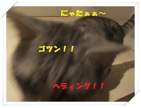 4_20110125220732.jpg