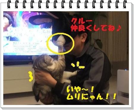 5_20110108101004.jpg