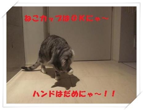 5_20110125220731.jpg