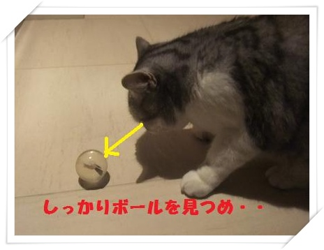 6_20110125220731.jpg