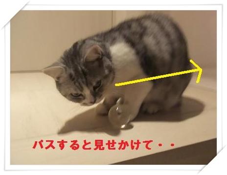 7_20110125220754.jpg