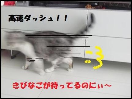 9_20110110151832.jpg