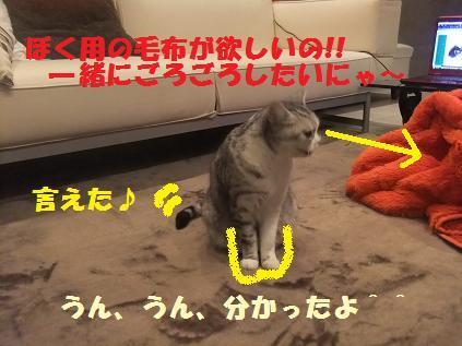 DSCF3669_20101229004152.jpg