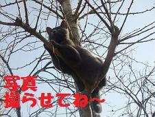 DSCF4038_20101224225914.jpg
