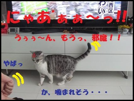 DSCF4513-2_20110111192747.jpg