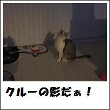 DSCF4883_20110105225144.jpg