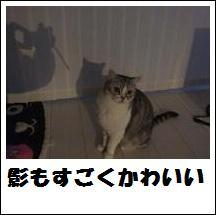 DSCF4896_20110105225144.jpg