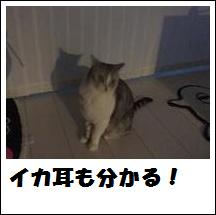 DSCF4897_20110105225143.jpg