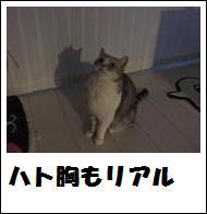 DSCF4898_20110105225143.jpg