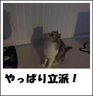 DSCF4902_20110105225143.jpg