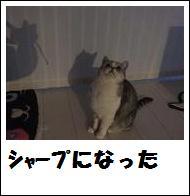 DSCF4904_20110105225233.jpg