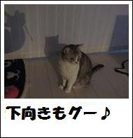 DSCF4905_20110105230650.jpg