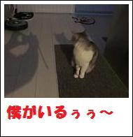 DSCF4909_20110105225233.jpg