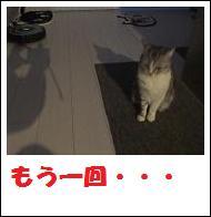DSCF4914_20110105225232.jpg