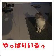 DSCF4915_20110105225232.jpg