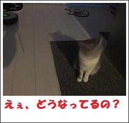 DSCF4917_20110105225304.jpg
