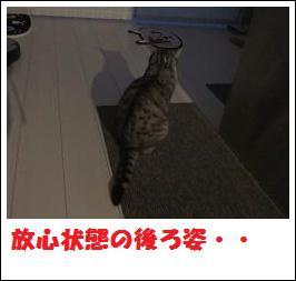 DSCF4921_20110105225304.jpg