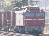 EF81 81号機牽引のコンテナ貨物列車