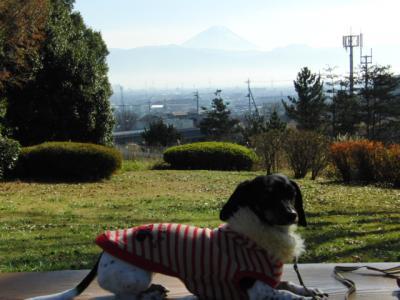 富士山とデイジー