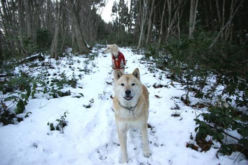 もののけの森へ雪山トレイル10