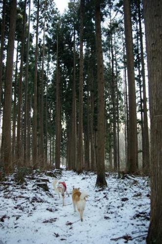 もののけの森へ雪山トレイル11