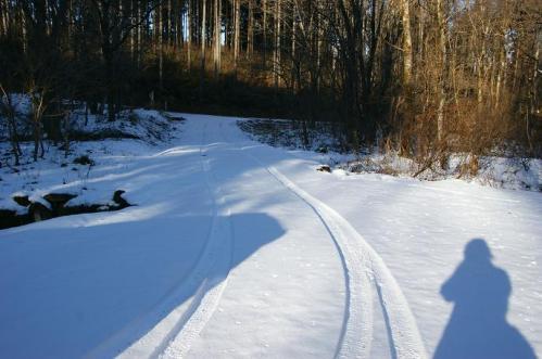 もののけの森へ雪山トレイル1