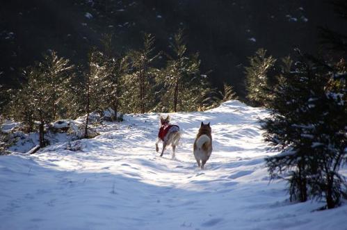 もののけの森へ雪山トレイル2