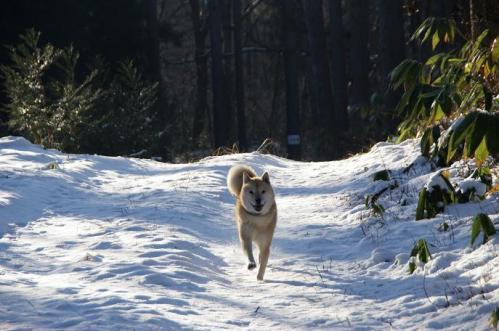 もののけの森へ雪山トレイル3