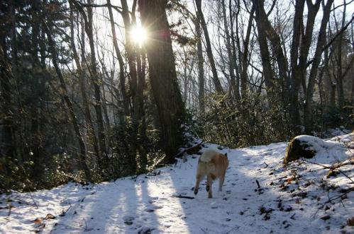 もののけの森へ雪山トレイル5