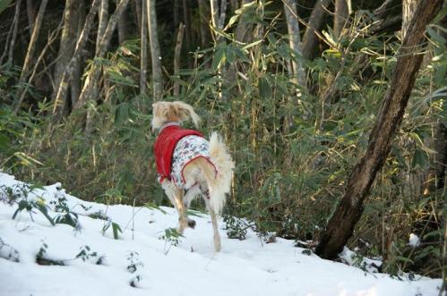 もののけの森へ雪山トレイル6