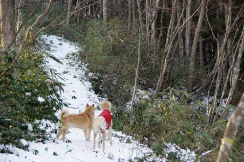 もののけの森へ雪山トレイル7